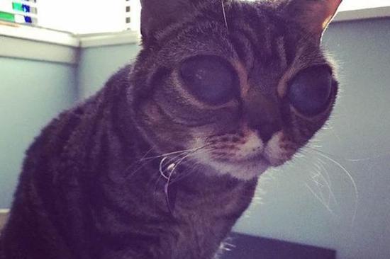两岁大的玛蒂尔达眼球巨大,酷似外星生物。