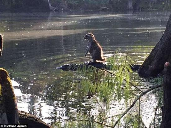 摄影师表示这是他值得一生留存的照片。图为拍地点Ocklawaha河