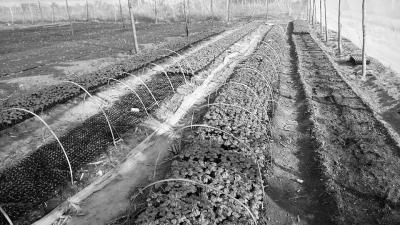 无公害蔬菜基地