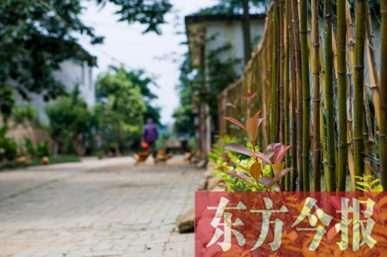 信阳美丽乡村之罗山 美丽乡村需要 内外兼修图片