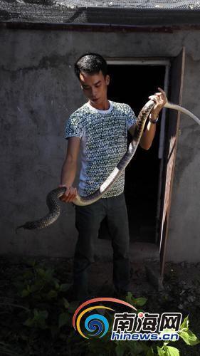 吴多明和他养殖的一条水律蛇