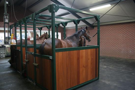 大赛之前需要提前让马来到赛场,为它尽可能的提供舒适环境