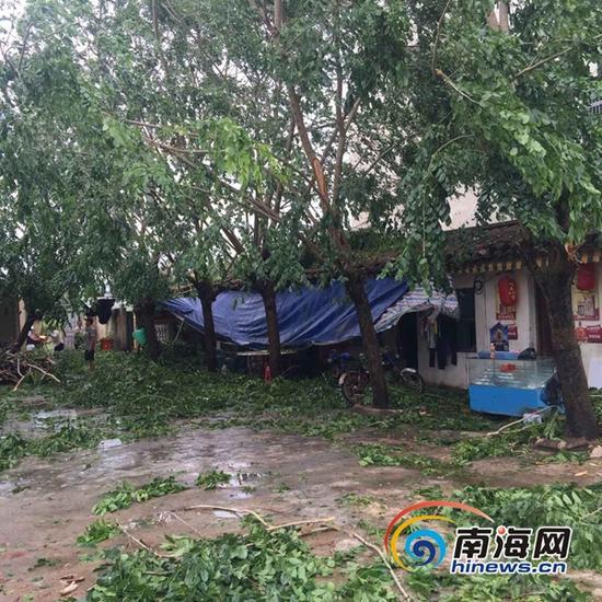 台风致万宁和乐镇镇区停电,部分树木拦腰折断(南海网记者马伟元摄)