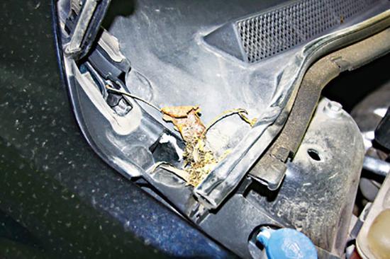 定期清理排水孔 夏季爱车特别要注意防水