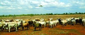 这片土地上有多个养牛场