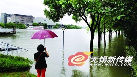 昨天运河水位大涨,小三里桥河边的树木、栈道泡在水里。 (晚报记者 方正 摄)