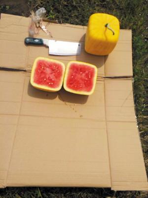 地产方形西瓜