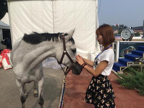 美女志愿者与马儿