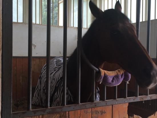 """穿着""""浴衣""""的马儿,像不像斑马?"""