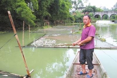 陈志强网箱中的鱼大量死亡