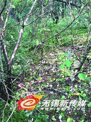 惠山二茅峰临近观景平台处的台阶旁、山林间垃圾遍地。(马雪梅 摄)