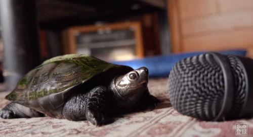 最后乌龟获得了胜利。