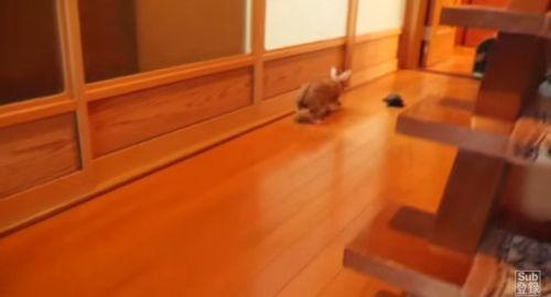 男子组织现实版龟兔赛跑