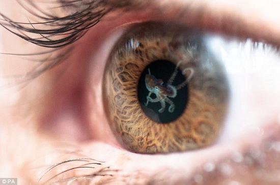 人类超能力:经过训练可提高偏振光感知能力
