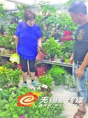 市民在花卉市场挑选盆栽。