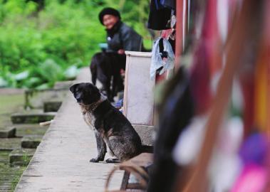 由于少有外人到来,村里的狗也十分惧怕外人。