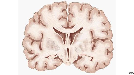 我们的记忆都去哪了:窥探大脑归档系统海马体