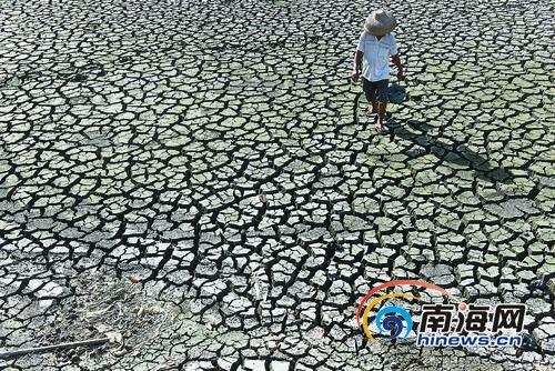 琼海潭门镇一位村民从干涸的鱼塘中走过。5月以来,我省出现持续高温天气,多个市县出现不同程度干旱。特约记者蒙钟德摄