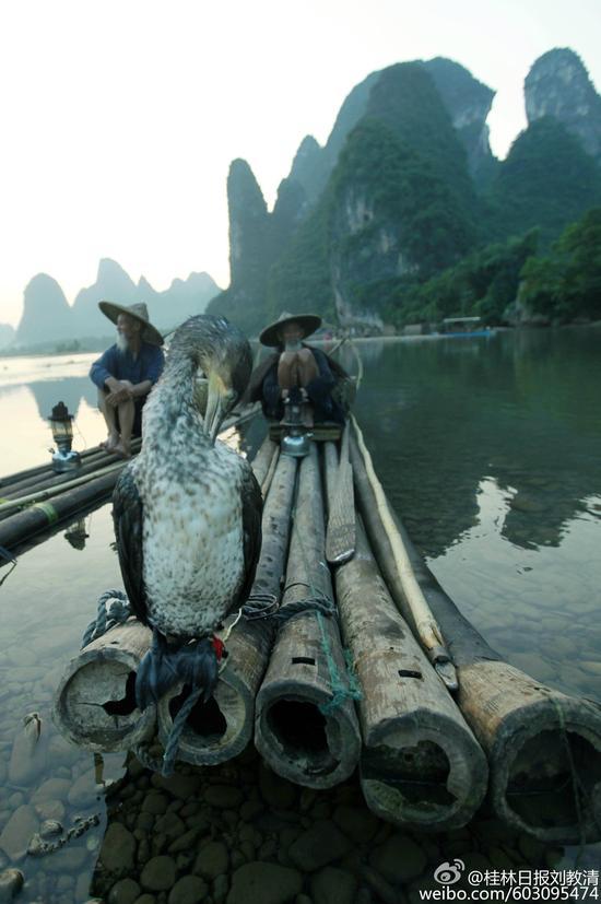 桂林漓江上的渔民模特 光环背后多艰辛(组图)