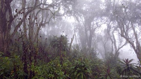 要保护山地大猩猩,我们就必须保护它们的栖息地