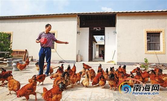 2015年7月14日,文昌市翁田镇松树一村的林诚笑容满面,在新翻修的屋前喂鸡。本报记者张茂摄