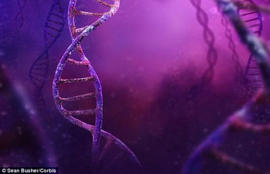 在一项新研究中,科学家收集了这些组织样本,发现生物钟基因的调节和活动在一晚睡眠缺失后发生变化。