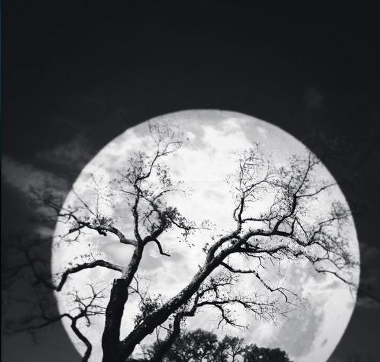 月色朦胧,树影婆娑