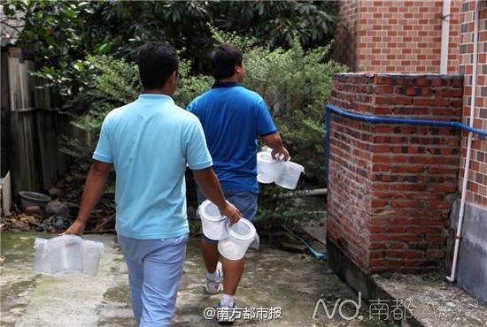 7月22日上午10点半,广州沙仔岛,一群成熟的携带新型沃尔巴克体的白纹伊蚊雄蚊静静地趴着,稍后,它们将被释放到野外,寻找雌蚊交配。交配后的雌蚊从此绝育。