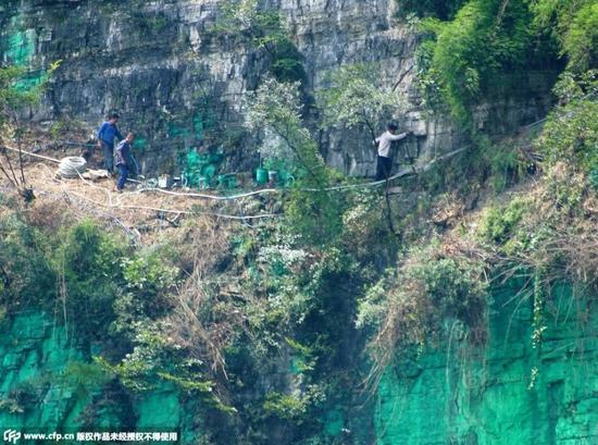 重庆居民嫌风水不好 将900米高悬崖刷上绿漆