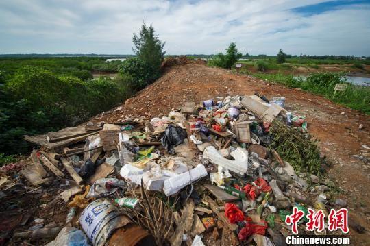 澄迈县一处高档楼盘附近的红树林遭到人为破坏,遭到掩埋沦为垃圾场。 骆云飞 摄