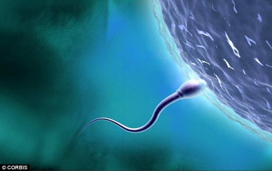 男性不育新希望:与陌生伴侣易产生高质量精子