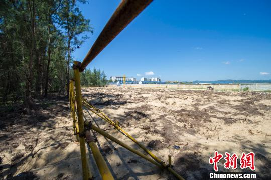 在建的七星级亚特兰蒂斯酒店已有工程项目侵占海防林。骆云飞摄