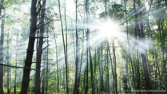 树林中透出的光线:光是我们体验这个世界的基础,人类的眼睛是光子探测器,我们借助可见光了解我们身边的世界