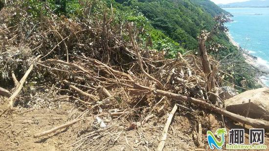 被毁坏的林木