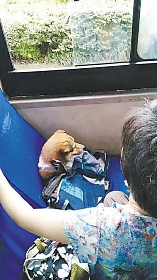昨日,一条小狗坐在475路公交车座位上。市民文先生供图