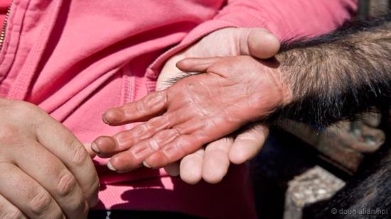 人手所发生的改变小于黑猩猩的手