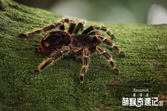 手工制作动物蜘蛛