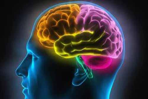 美科学家称培育出近乎完整人脑。