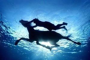 炎炎夏日马儿也靠游泳避暑 这样独特的泳姿美吗?