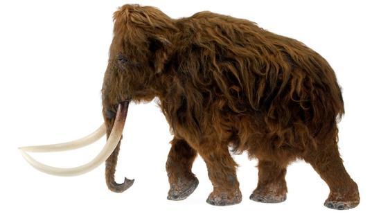 埃塞克斯郡伊尔福德区发现的长毛猛犸象模型。