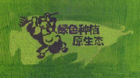 八戒:绿色种植原生态