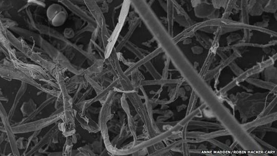 科学家收集全美1200户家庭的尘埃样本