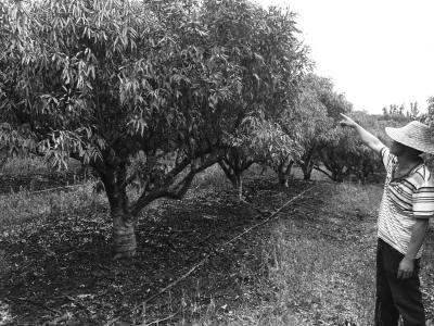树下被烧坏的水管