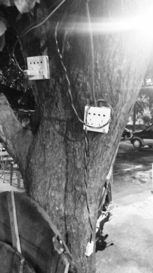 安装在树上的插座