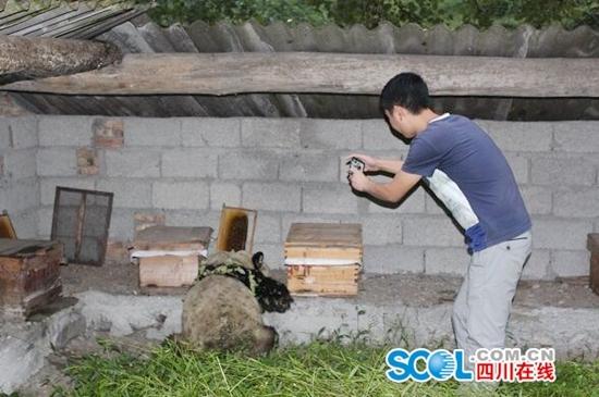 """""""吃货""""大熊猫进村,满身沾满了花草"""