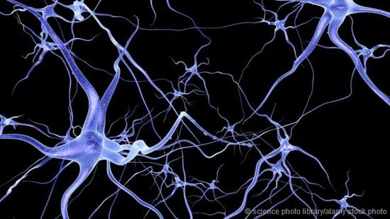 人类大脑的神经元网络。