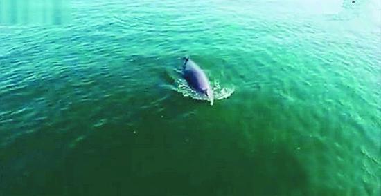 长海摄影人张忠民拍下的鲸鱼出现在大连宣传片中。