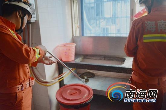 一米蟒蛇光顾居民厨房,海口消防官兵在现场抓获。(通讯员吕书圣摄)