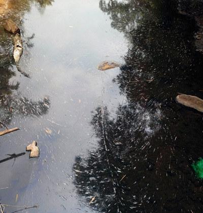 被污染的河水 (南海网记者刘培远摄)