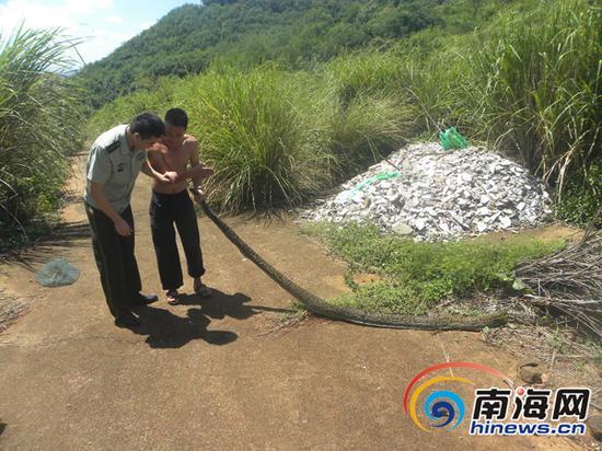 民警与当地村民把蟒蛇运到野外放生南国都市报通讯员黄恒摄